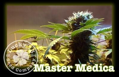 Master Medica