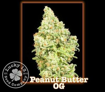 Peanut Butter OG