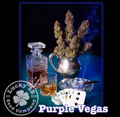 Purple Vegas