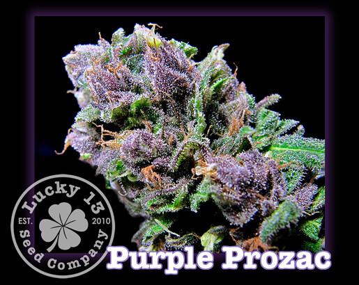 Purple Prozac