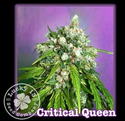Critical Queen