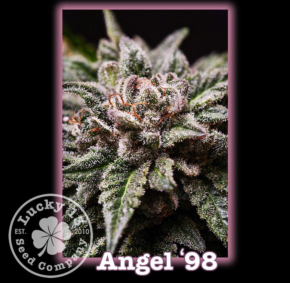 Angel 98'