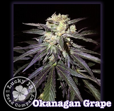 Okanagan Grape
