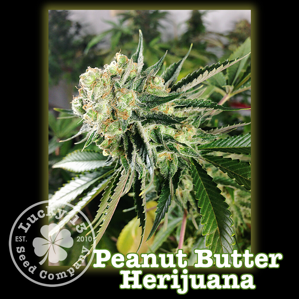 Peanut Butter Herijuana