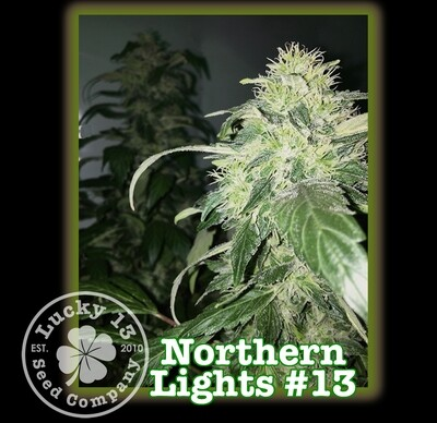 Northern Lights #13