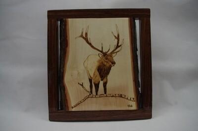 Bull Elk with an Aspen Limb