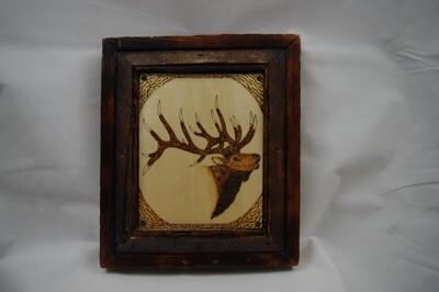 Bull Elk with Antique Barnwood Frame
