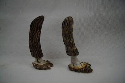 Set of Mule Deer Antler Hand Carved Morel Mushrooms
