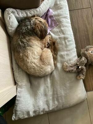 LINEN BED FOR DOG