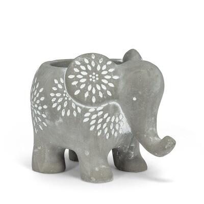 Elephant Plantar