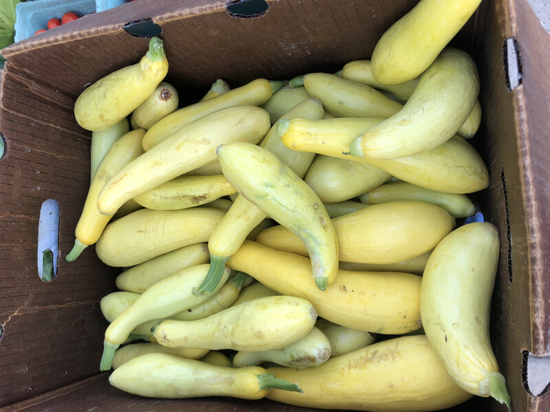 Yellow Squash, by the pound
