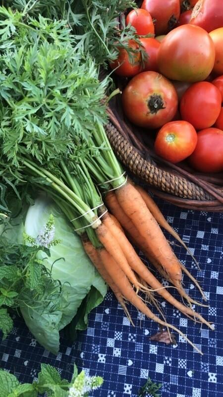 Carrots, bundled