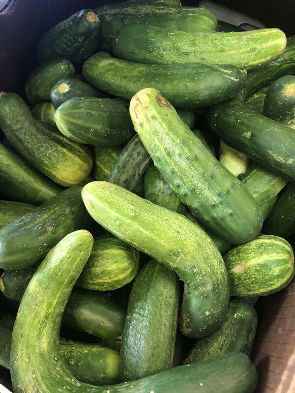 Cucumbers, by the Pound