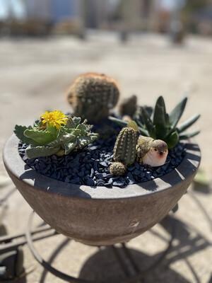 Desert Zen