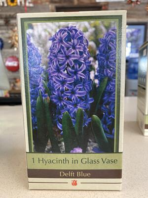 Hyacinth Grow Kit
