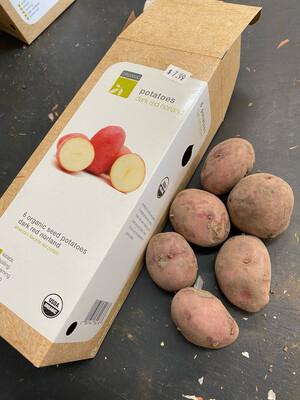 Organic Seed Potatoes 'Dark Red Norland'
