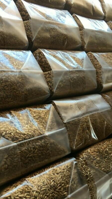 3 Pound Sterilized Grain Bag