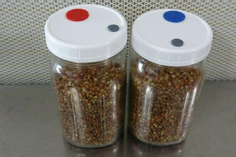 32 Oz. Sterilized Grains Jars