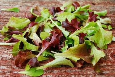 Mixed Leaf Lettuce Tub