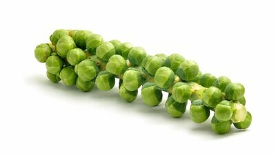 Sprout Stalk
