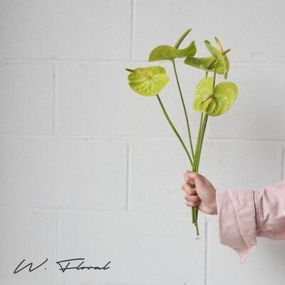 Single of Anthurium - Green