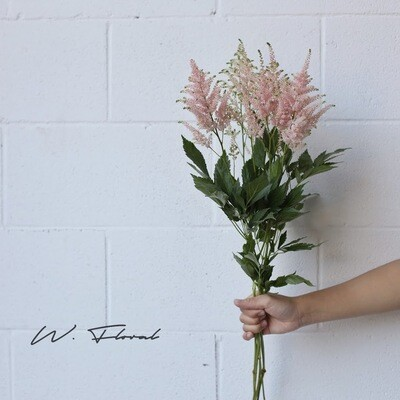 Bunch of Astilbe - Pink