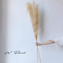Dried Pampas Grass - Beige