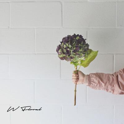 Single of Holland Hydrangea - Purple Green