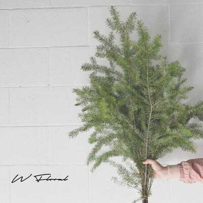 Bunch of Christmas Green - Douglas Fir