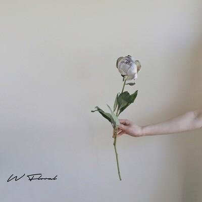 Single of Tinted Peonies (Peony) - Khaki Grey