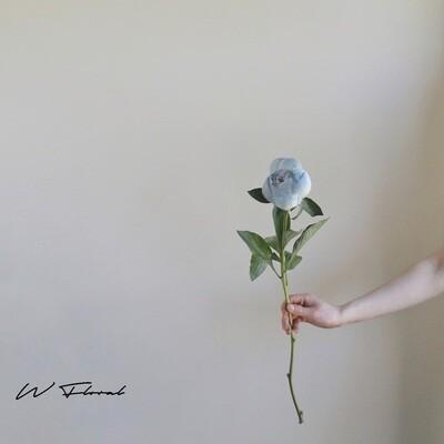 Single of Tinted Peonies (Peony) - Cloudy Blue