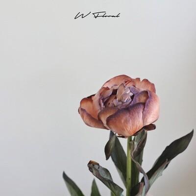 Single of Tinted Peonies (Peony) - Brownie