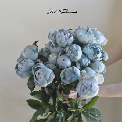 Bunch of Tinted Peonies (Peony) - Cloudy Blue