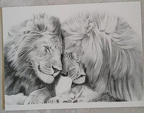 Lion & Lioness 02
