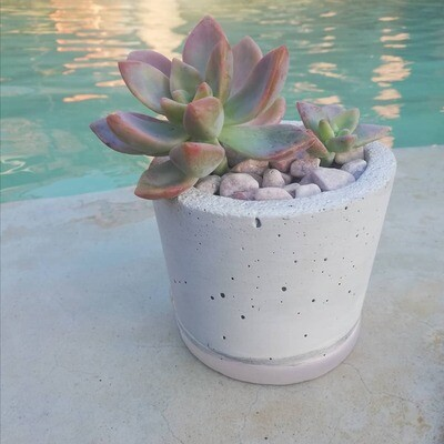 Pink Love, Succulents and Pot