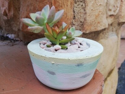 Little Pink Love, Succulents and Pot