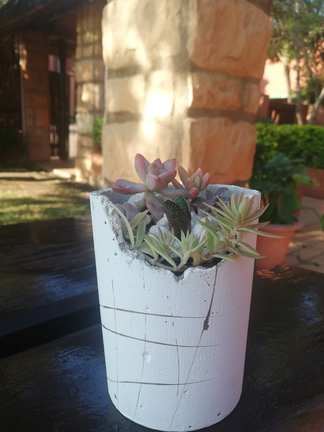 Little White, Rustic, Succulents and Pot