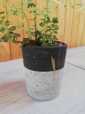 Black & Grey, Succulents and Pot