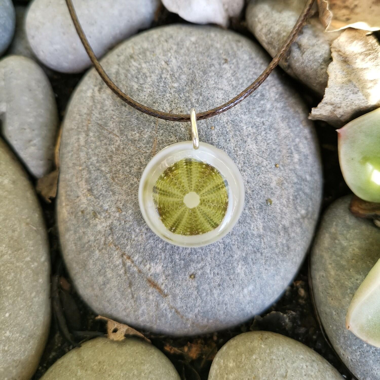 Sea Urchin Shell Necklace