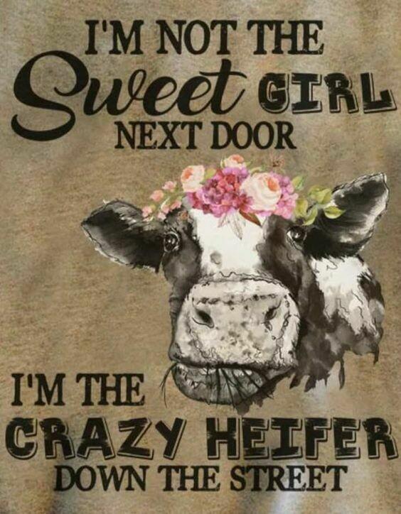 I'm not the Sweet girl next door. I'm the crazy heifer down the street shirt, Heifer cow shirt, heifer down street, Heifer tee, cow shirt, crazy Heifer shirt, Sweet girl tee, girl next door shirt