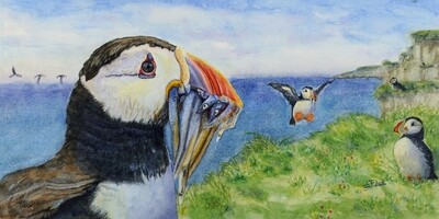 The Day's Catch, Atlantic Puffin
