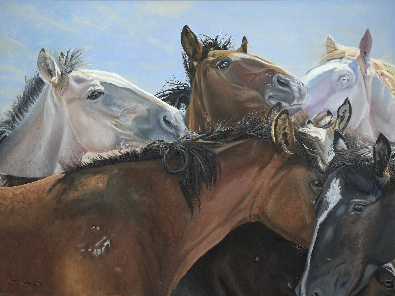 Horse Whispers, Wild American Horses