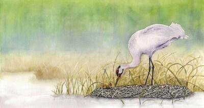 A New Dawn - Whooping Crane