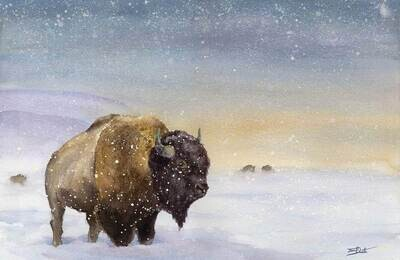 The Sentry, American Plains Bison