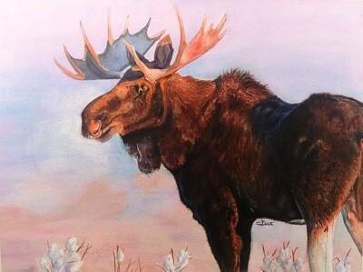 Prairie Frost, Western Moose