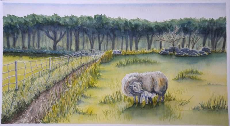 Westerguard's Field, Sheep