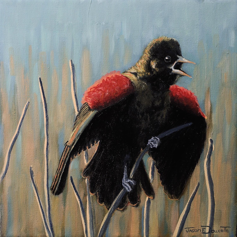 Marsh Poppies, Red Winged Black Bird