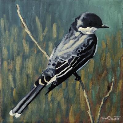 KingBird, Eastern King Bird