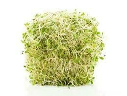 ALFALFA SPROUTS 120G PACK