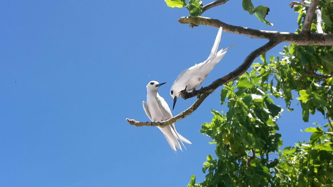 PRASLIN: Aride Vogelschutzgebiet 4 Std. Tour, Surfari - David Pool-Güntensperger, PREIS: 110€, Anzahlung;